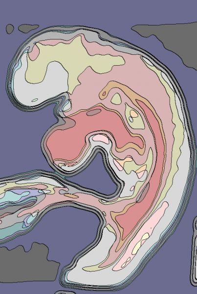 embryon4s.jpg