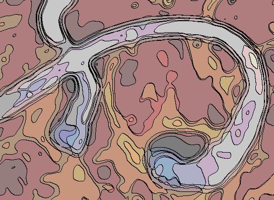 spermatozodeovule02.jpg